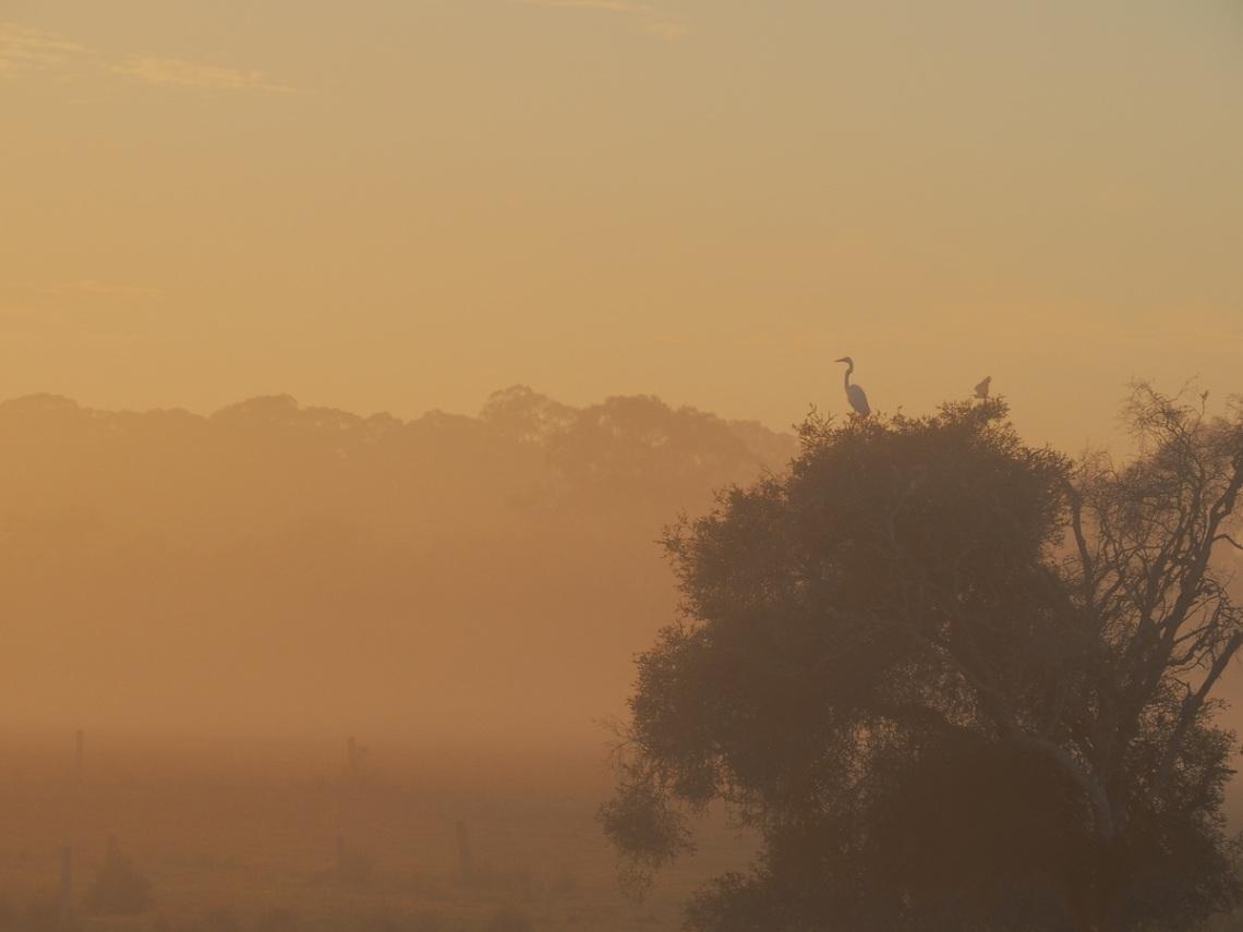 Crane warming herself in the morning sun