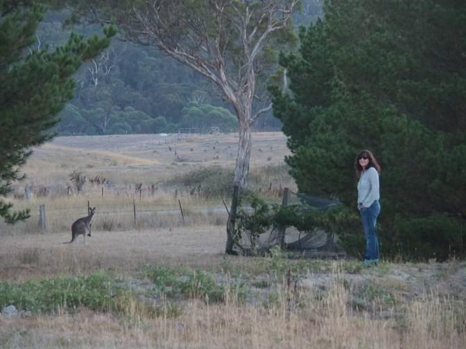 The last kangaroo