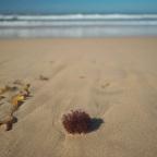 Vagabonding – Albury, Bendigo, Heathcote and Ocean Grove