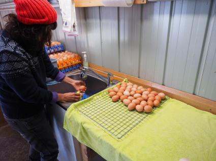 Hand washing the eggs