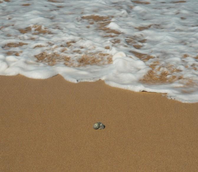 Sea shell on the sea shore