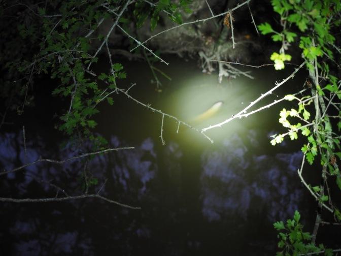 The eel in the creek.