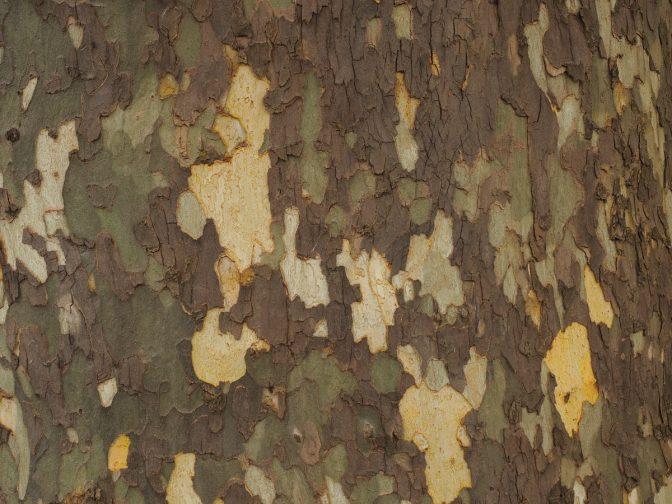 Stealth tree bark