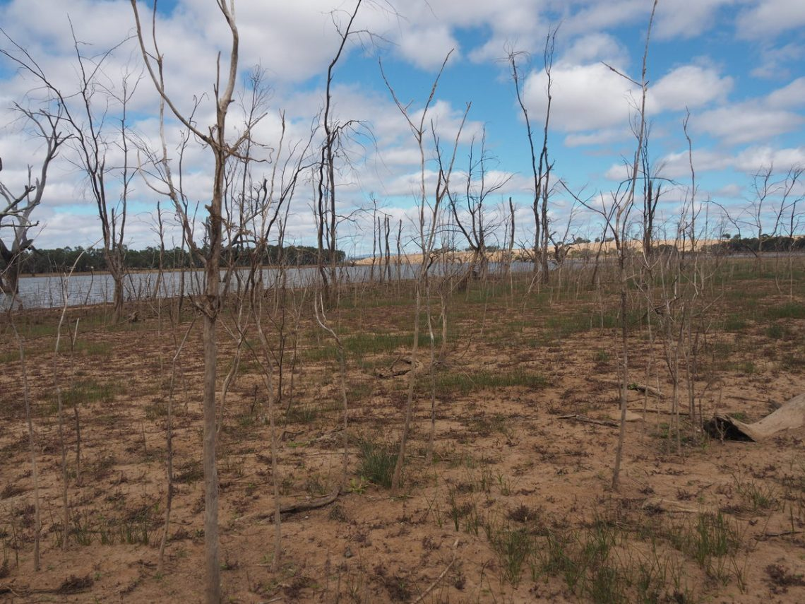 Trees growing from the lake bed