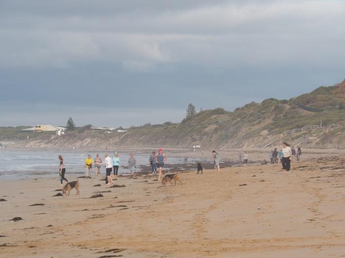 Ocean Grove Dog Beach