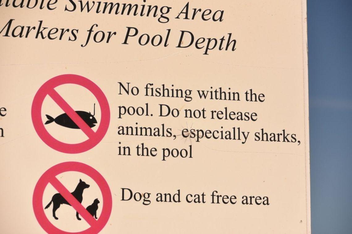 Especially Sharks