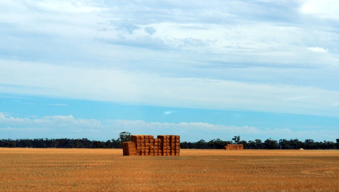 Straw Bales drying in the fields