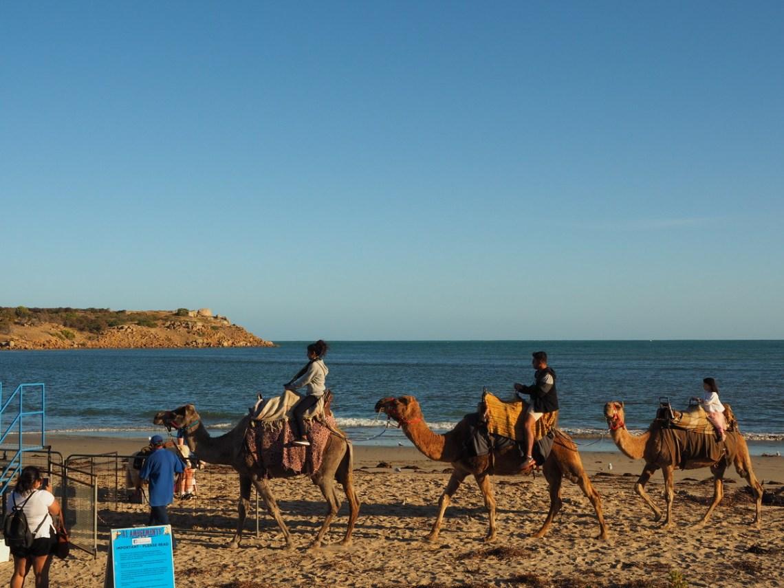 Victor Harbour Camels