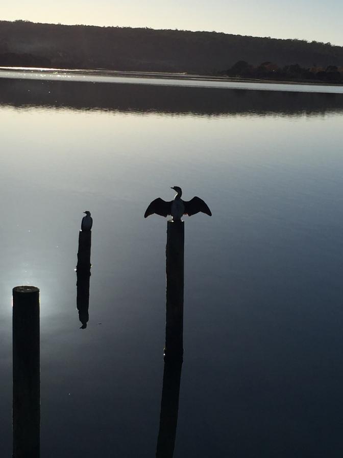 Bat Signal Bird