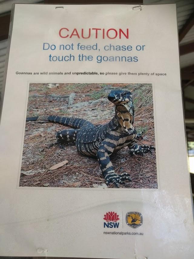 Dangerous Goanna Poster