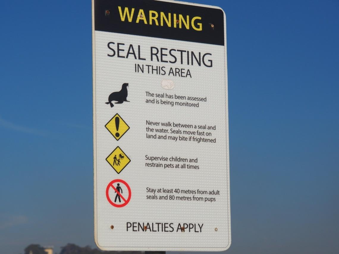 Seals bite