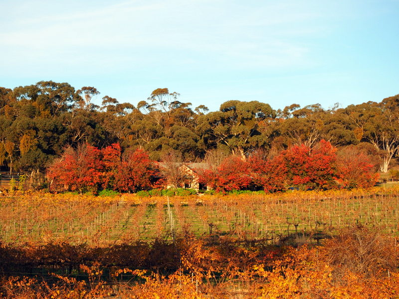 Our place in  Clare Valley