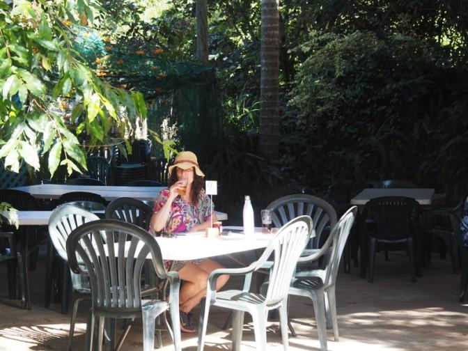 Silky Oak Tea Gardens