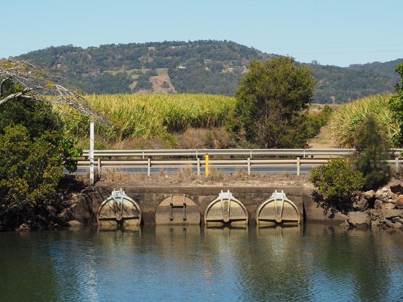 Cane fields and flood gates