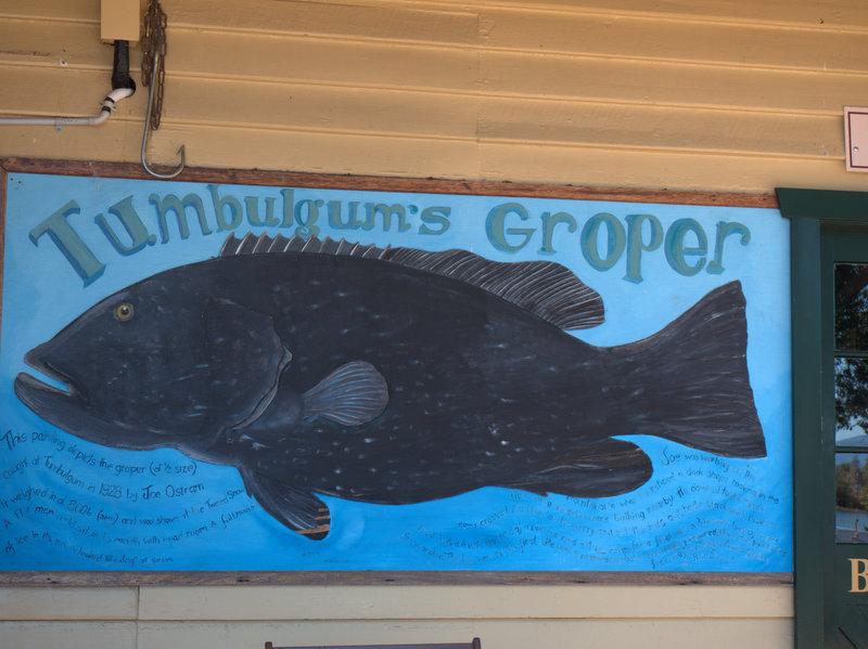 Tumbulgum Groper