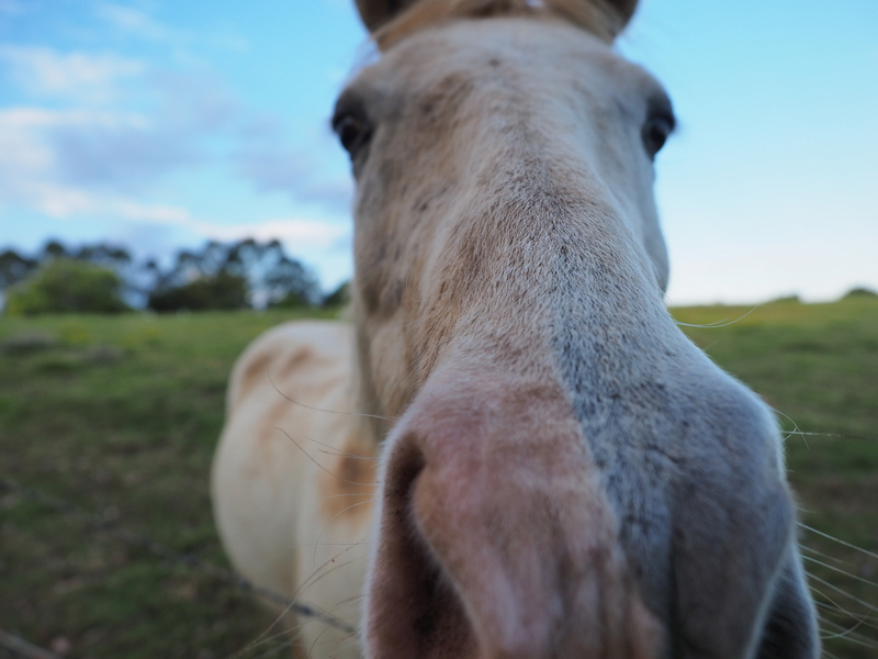 VERY inquisitive horse