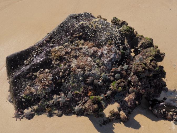 Star fish rock