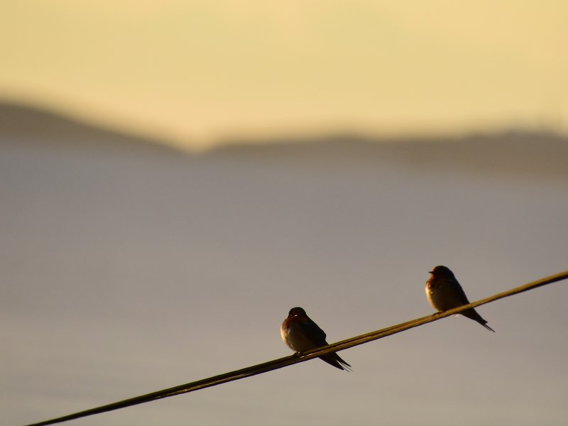 Birds enjoying the sunrise