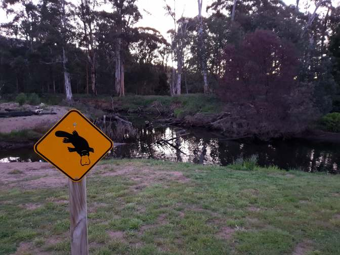 I hope the Platypus can read and know where to come